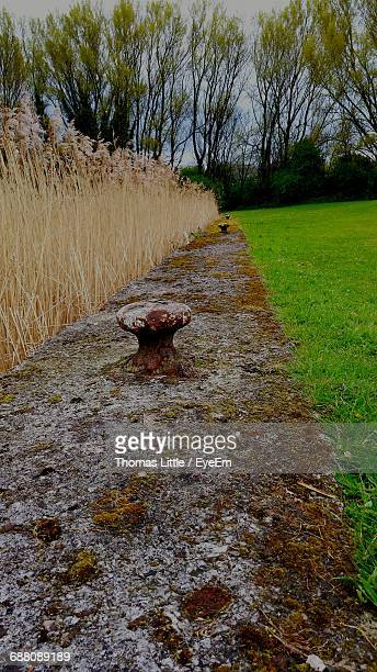 scenic view of footpath - widnes stock pictures, royalty-free photos & images