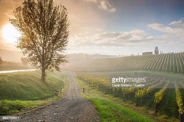 scenic view of footpath through a vineyard - wine vineyard stock photos and pictures
