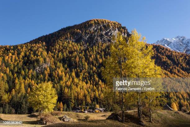 Scenic View Of Forest Against Clear Sky During Autumn