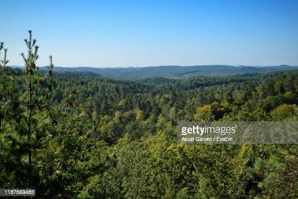 scenic view of forest against clear sky - aksel garves stock-fotos und bilder
