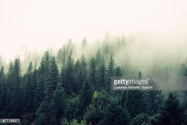 scenic view of forest against clear sky - fog stock pictures, royalty-free photos & images