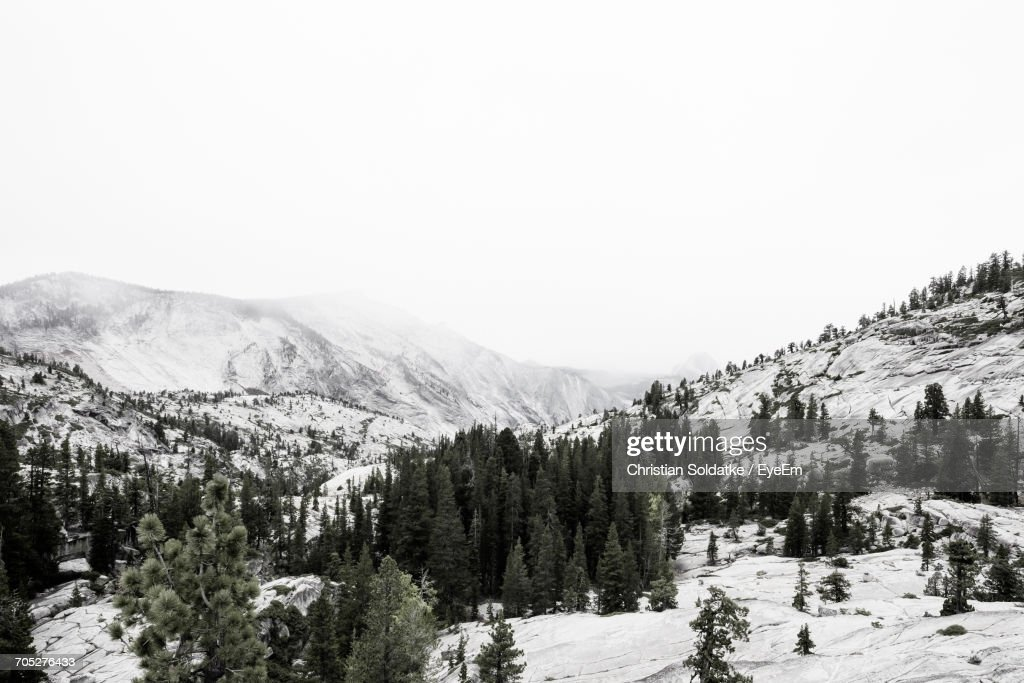 Scenic View Of Forest Against Clear Sky : Stock-Foto