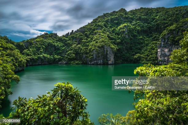 scenic view of forest against cloudy sky - surat thani province stock pictures, royalty-free photos & images