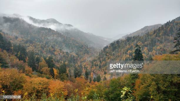 scenic view of forest against sky during autumn - pigeon forge stock pictures, royalty-free photos & images