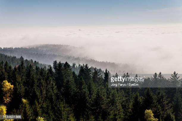 Scenic View Of Forest Against Sky During Foggy Weather