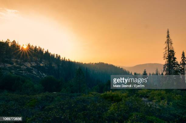 scenic view of forest against sky during sunset - sequoia national park stock pictures, royalty-free photos & images