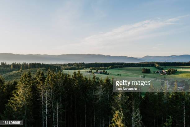 scenic view of forest against sky during sunset - baden württemberg stock pictures, royalty-free photos & images