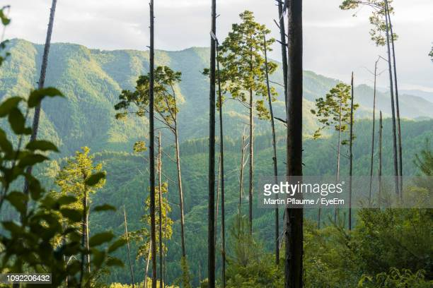scenic view of forest against sky - matsuyama ehime stock pictures, royalty-free photos & images