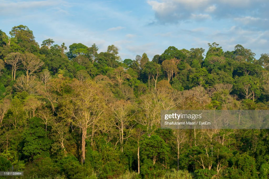 Scenic View Of Forest Against Sky : Stock Photo