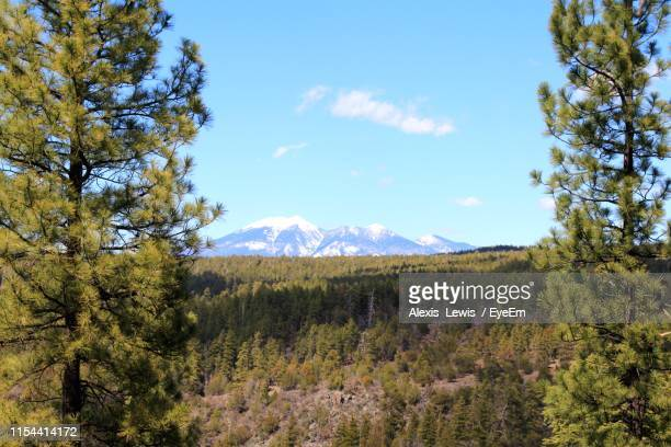 scenic view of forest against sky - flagstaff arizona stock pictures, royalty-free photos & images