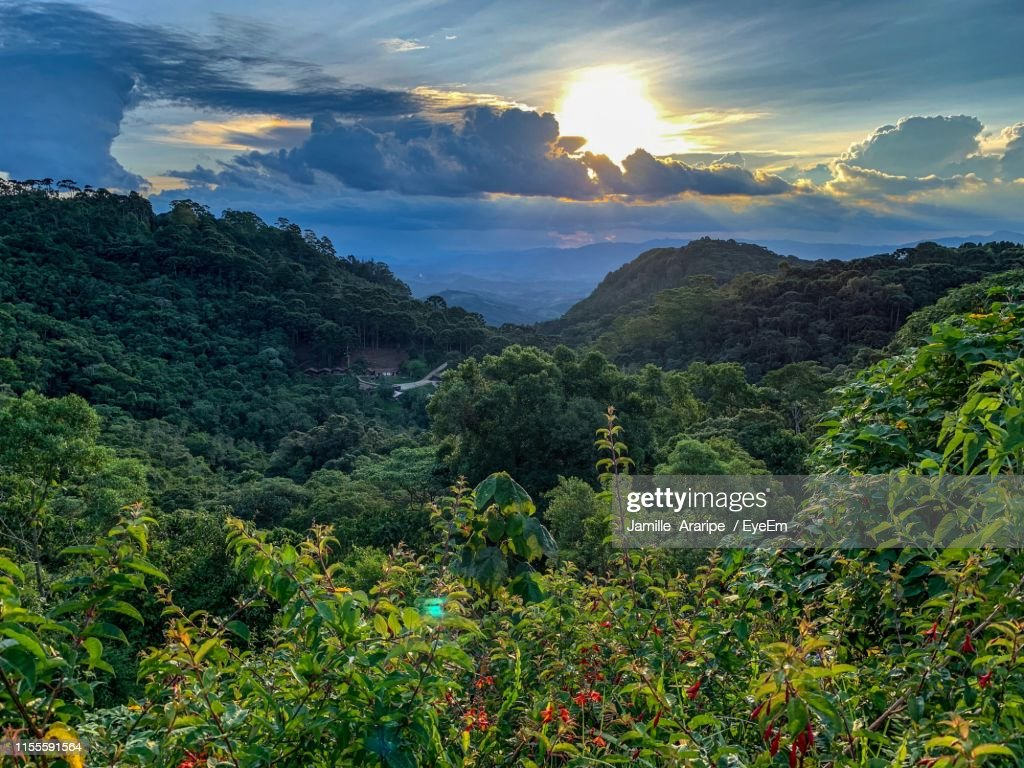 Scenic View Of Forest Against Sky : Stock-Foto