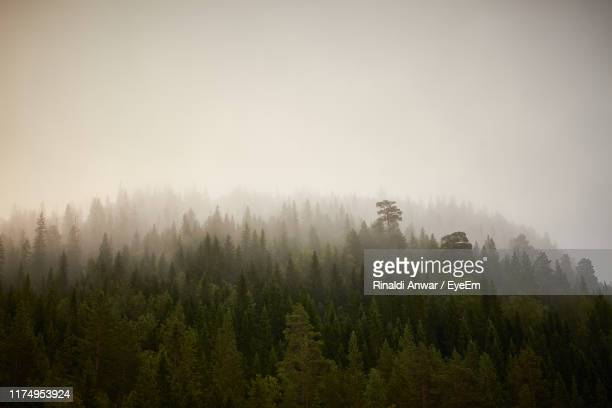 scenic view of forest against sky - トロンハイム ストックフォトと画像