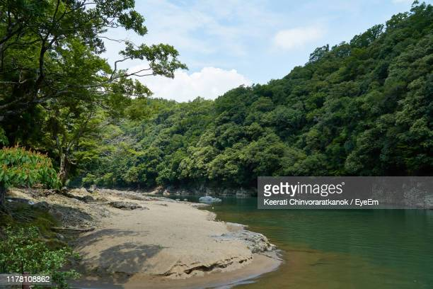 scenic view of forest against sky - 川岸 ストックフォトと画像