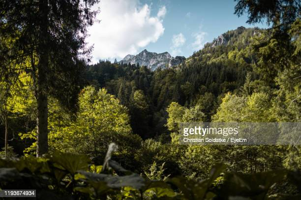 scenic view of forest against sky - christian soldatke stock pictures, royalty-free photos & images