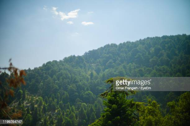 scenic view of forest against sky - lebanon stock pictures, royalty-free photos & images