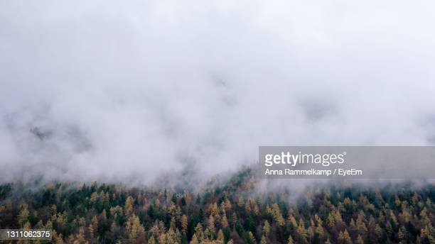 scenic view of forest against sky - mittenwald fotografías e imágenes de stock