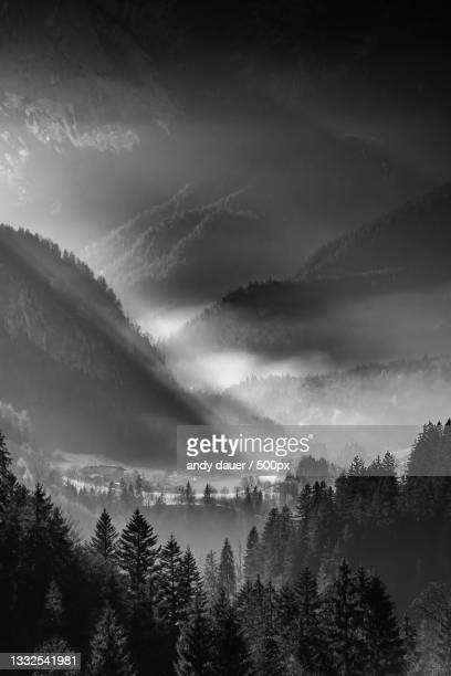 scenic view of forest against sky - andy dauer stock pictures, royalty-free photos & images