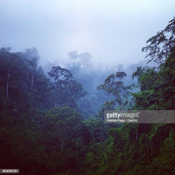 scenic view of forest against sky - equatorial guinea stock pictures, royalty-free photos & images