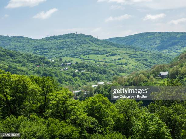 scenic view of forest against sky - igor golovniov stock pictures, royalty-free photos & images