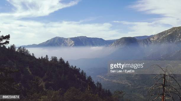 scenic view of forest against sky - big bear lake stock photos and pictures