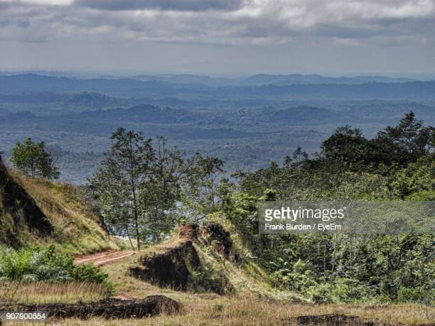 scenic view of forest against sky - liberia stock pictures, royalty-free photos & images