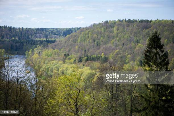 scenic view of forest against sky - brezinska stock pictures, royalty-free photos & images