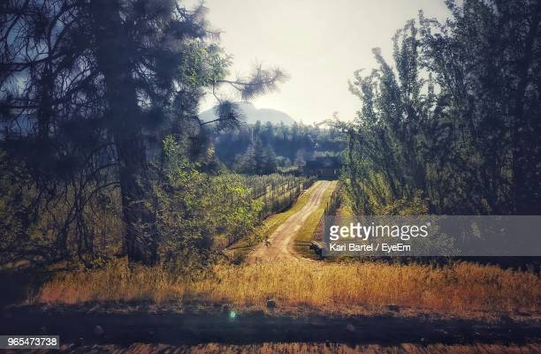 scenic view of forest against sky - kelowna stock pictures, royalty-free photos & images