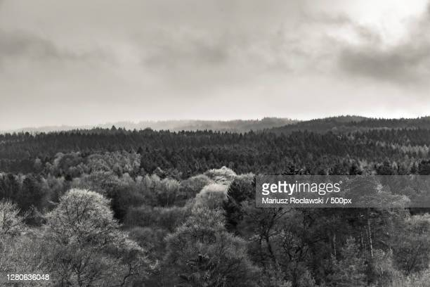 scenic view of forest against sky,hamburg,germany - mariusz roclawski stock-fotos und bilder