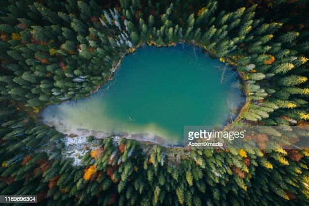 vista panoramica della foresta e del lago dal punto di vista aereo - parco nazionale foto e immagini stock