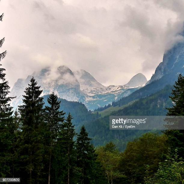 scenic view of forest and mountains against cloudy sky - dan peak stock photos and pictures