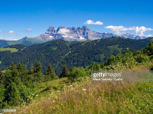 scenic view of forest and mountains against sky - marek stefunko stock photos and pictures