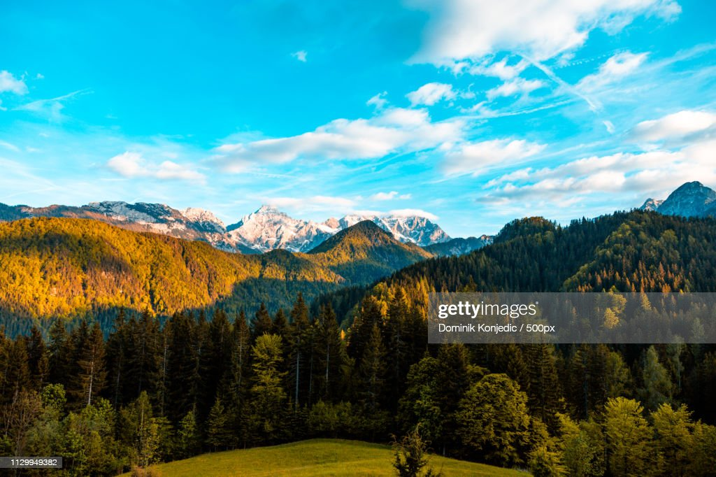 Scenic view of forest and mountains : Stock Photo