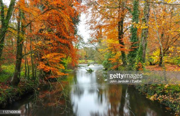 scenic view of forest during autumn - riverbank stock pictures, royalty-free photos & images