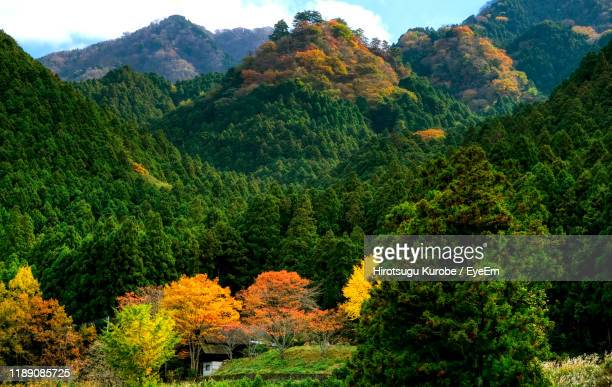 scenic view of forest during autumn - matsuyama ehime stock pictures, royalty-free photos & images