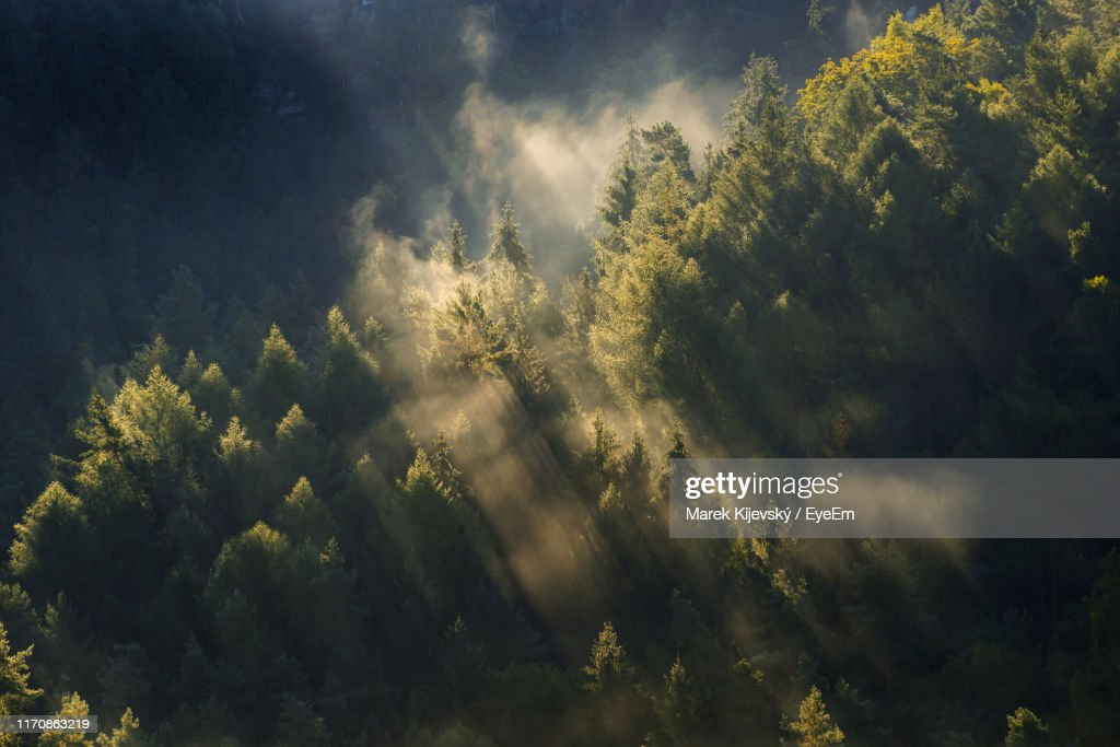 Scenic View Of Forest During Foggy Weather : Foto de stock