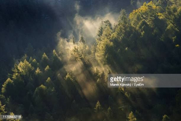 scenic view of forest during foggy weather - wald stock-fotos und bilder
