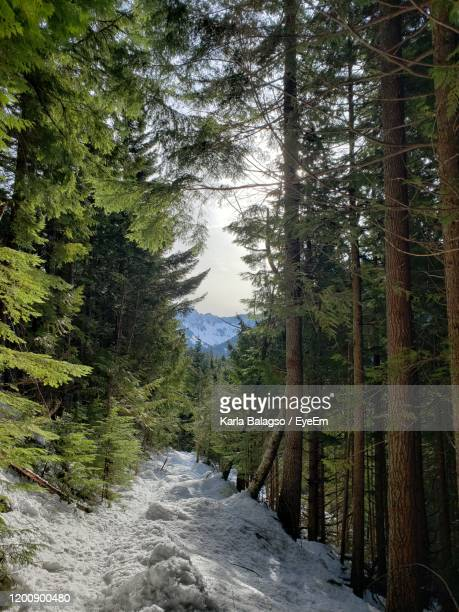 scenic view of forest during winter - plant part stock pictures, royalty-free photos & images
