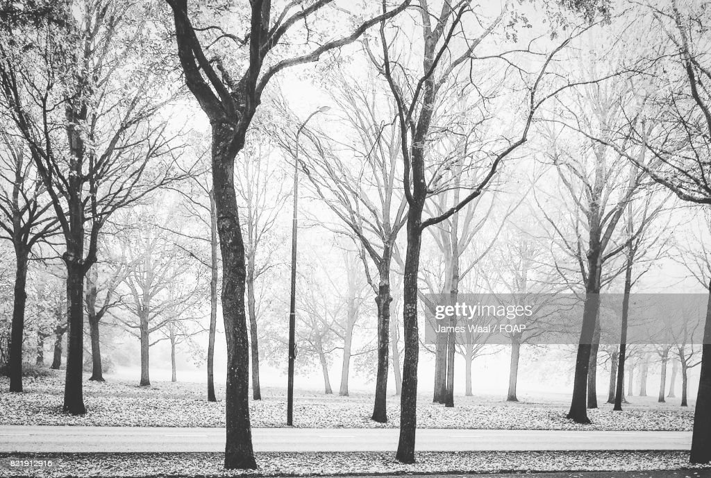 Scenic view of forest during winter : Stock Photo