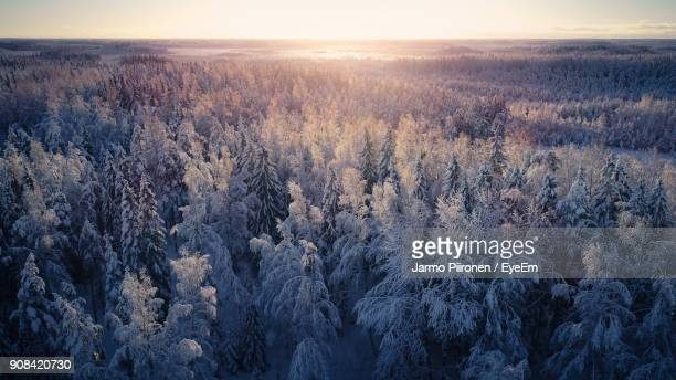 scenic view of forest during winter - northern europe stock pictures, royalty-free photos & images