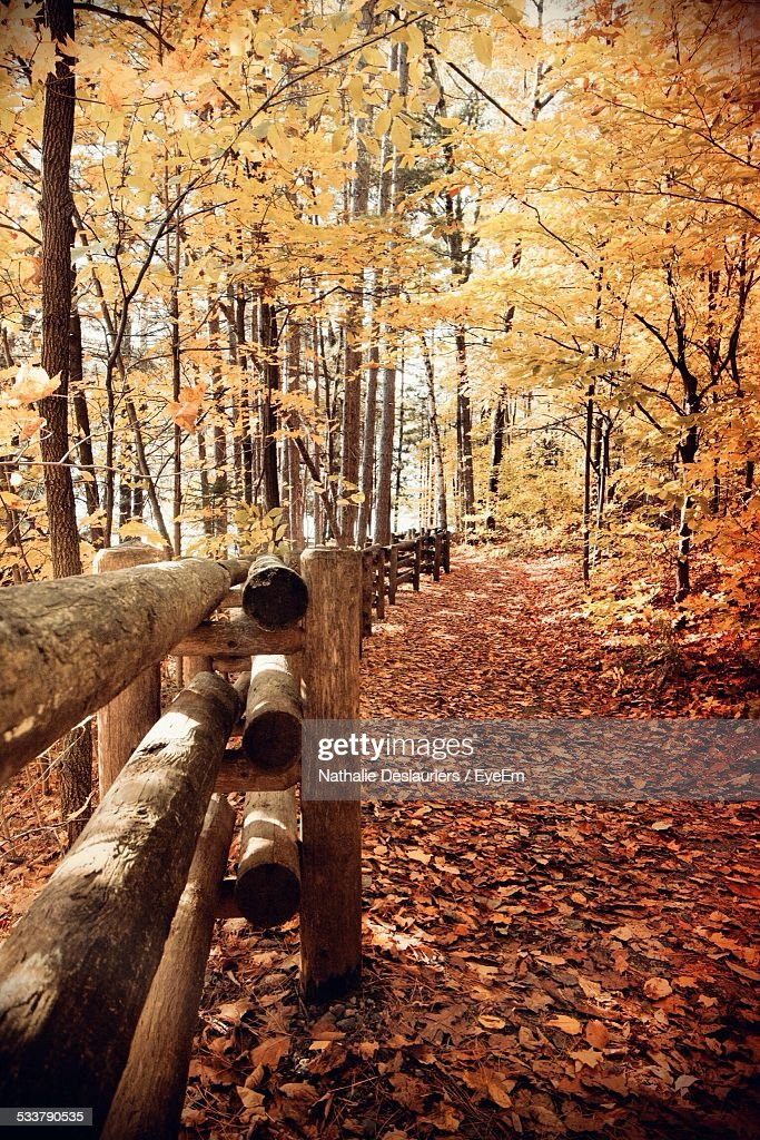 Scenic View Of Forest In Autumn : Foto stock