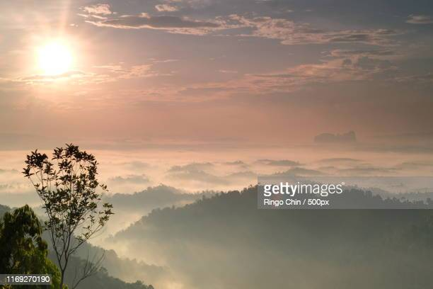 scenic view of forest in fog - world at your fingertips stock pictures, royalty-free photos & images