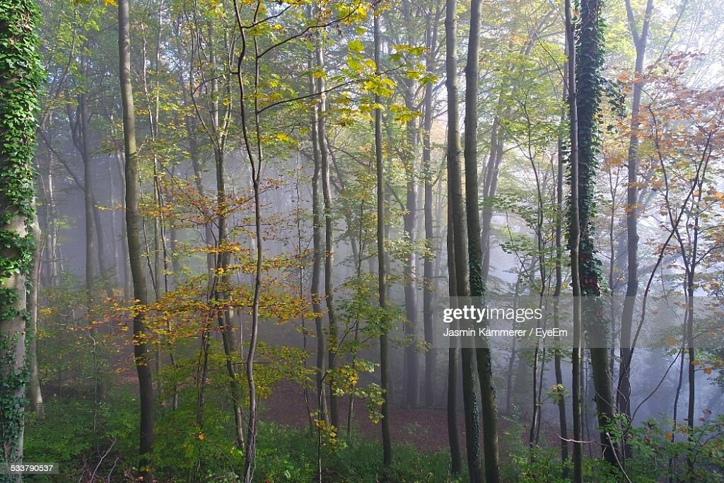 Scenic View Of Forest In Foggy Weather : Foto stock
