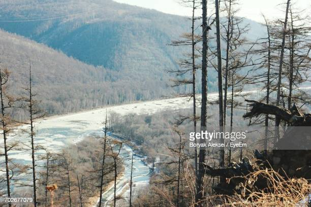 Scenic View Of Forest In Winter