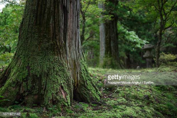 scenic view of forest - massa stock pictures, royalty-free photos & images