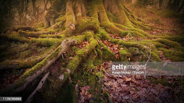 scenic view of forest - karen mckay stock photos and pictures