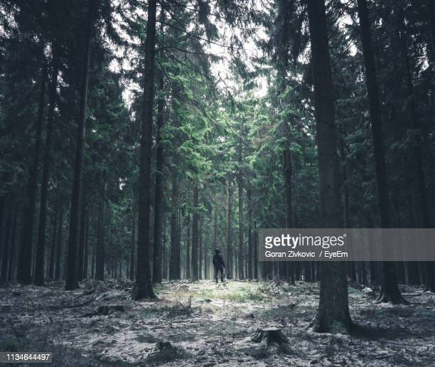 scenic view of forest - grove stock pictures, royalty-free photos & images