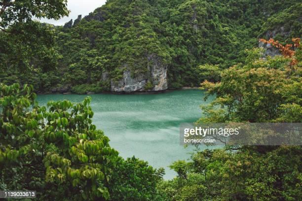 scenic view of forest - bortes cristian stock-fotos und bilder