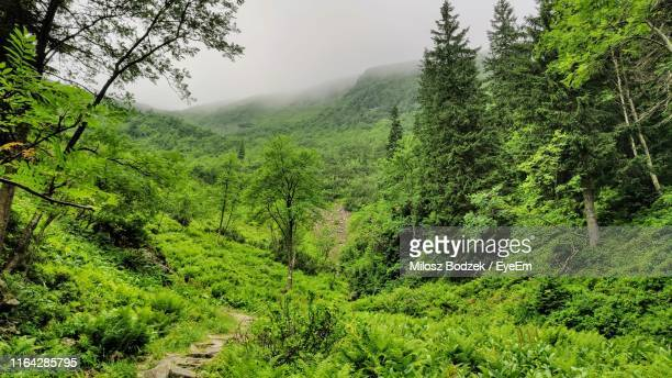 scenic view of forest - babia góra mountain stock pictures, royalty-free photos & images
