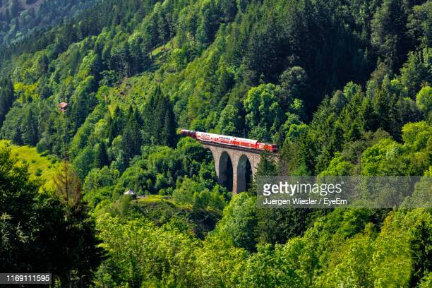 scenic view of forest - duitsland stockfoto's en -beelden