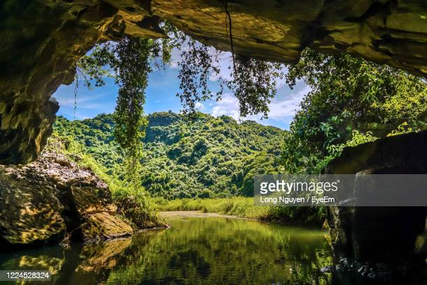 scenic view of forest - grotto stock pictures, royalty-free photos & images